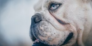 Traanvlekken Hond